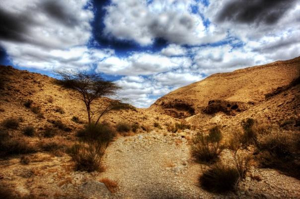 Negev_Desert_1